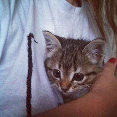 Quando ela chegou...  Fiona veio pra cá com 45 dias de vida pequenina e assustada tomou os nossos corações amor à primeira vista  #tbt especial do #catloversday  bom diaaaa!!!  #cats #instacats #catstagram #picoftheday #moms #love #pets