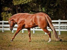 Mechanic. AQHA Stallion. @Laura Jayson Jayson Jayson Jayson Richardson Would be PERFECT for Mary