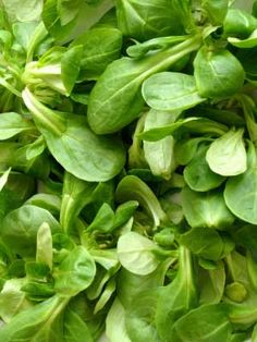 Corn salad, also known as Lambs Lettuce