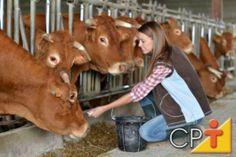 A importância dos suplementos na dieta dos bovinos na época da seca #cursoscpt