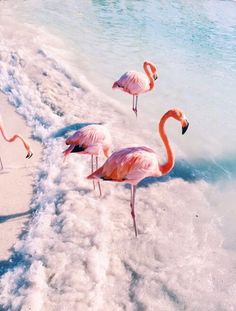 Flamingos on the beach!