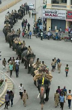 Elephants in Mysore India practicing for the procession ceremony. Best Picture For India clothes F Goa India, South India, Taj Mahal, Varanasi, Rishikesh, Cool Pictures, Cool Photos, Elephant Photography, India Architecture