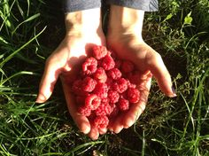 Raspberries ....my home country, my parents house, my Moldova!