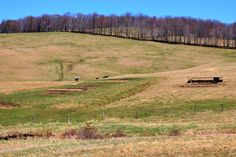 Nice day for a drive through Brackney, PA 4/25/2015