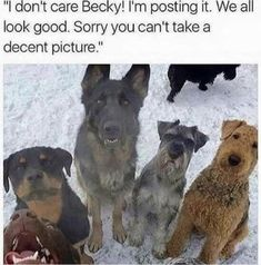 Can't stop laughing because these memes are way too hilarious then you think. Check our compilation of top 40 funny memes that will cure your bad day. Funny Dog Memes, Funny Animal Memes, Cute Funny Animals, Cat Memes, Funny Cute, Funny Dogs, Hilarious, Funniest Animals, Funny Kitties