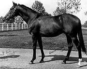 Count Fleet was the sixth American Triple Crown winner in the year 1943.