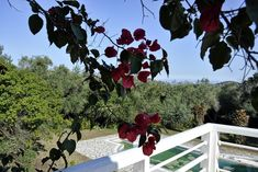 Charming house for sale with guest apartment in Sgompou, North East Corfu. Corfu Island, Corfu Greece, Charming House, Houses, Homes, Home, House