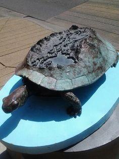 Turtle Island- Auburn WA