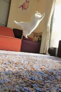 ballet-cat-4
