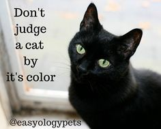 Don't judge a cat by it's color! @easyologypets
