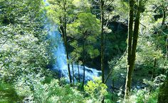 Erskine Falls drops 30 metres in thick, temperate rainforest.