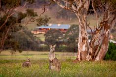 Emirates One&Only Wolgan Valley in Australia