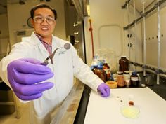 Engineers from Oak Ridge National Laboratory have announced the successful testing of an all-solid lithium-sulfur battery with about four times the energy density of today's lithium-ion batteries. Clean Technology, Engineering Technology, Futuristic Technology, Oak Ridge National Laboratory, Hobby Electronics Store, Energy Density, Energy Storage, Aquaponics System, Hydroponics