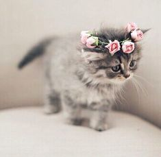 Cute Videos Of Animals And Babies provided Cats And Kittens For Sale East Anglia. Cute Baby Animals Videos Compilation Cute Moments or Cute Animals Games underneath Cats And Kittens For Adoption Near Me