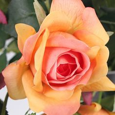 Winston Porter Real Touch 2 Rose Bloom Stem Number of Stems: 5 Stems, Flower Color: Orange Flowers Nature, Colorful Flowers, Draw Flowers, Moon Plant, Rare Roses, Fragrant Roses, Hybrid Tea Roses, Blooming Rose, Topiary