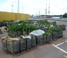 Urban farming in Helsinki, Finland