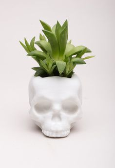 3D Printed Skull Planter, Awesome, Boyfriend Gift, Gothic, Cute, Home Deco, Gardening, punk, Rock