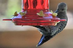 More Birds Than Hummingbirds Will Visit Nectar Feeders!