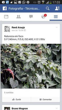 Natureza em foco