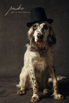 English Setter Bow Tie