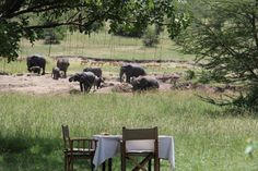 lunch under the shade of a sausage tree watching elephants at Mara Bushtops