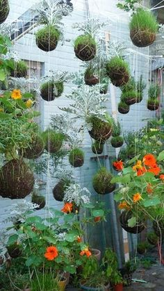 """Found via Urban Garden, these hanging gardens are an art installation type project by Fedor. Using string, moss, grass, and bowls or a glass reservoir - plants are transformed into suspended living works of art that are a variation of the Japanese botanical style, kokedma. The string gardener says his intention is for the plants to """"find their balance"""" as they grow and become heavy."""