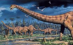 Diplodocus was one of the longest animals to have lived on Earth and may have reached over 30 metres and weighed around 15 tonnes