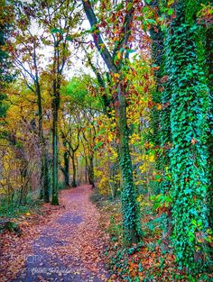 Colorful Trees by airness66 #nature #mothernature #travel #traveling #vacation #visiting #trip #holiday #tourism #tourist #photooftheday #amazing #picoftheday
