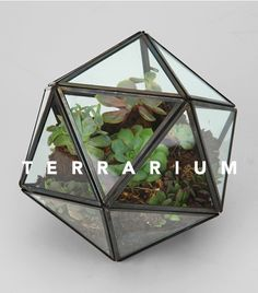 Terrarium Branding - olivia street (this one might be easier to make).