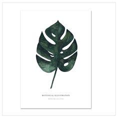 """Kunstdruck / Poster """"Monstera Deliciosa"""" · Aquarell auf hochwertigem Kunstdruckpapier · In verschiedenen Größen bestellen im Atelier Leo la Douce"""