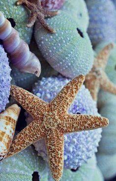 Sea star :) by ceca photo mer, marine life, sea creatures, ocean I Love The Beach, Ocean Life, Ocean Beach, The Ocean, Nature Beach, Shell Beach, Blue Beach, Beach Walk, Beach Fun