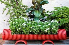 Reclaimed PVC pipe upcycled as planter #garden #containergardens