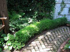 brick pathway with boxwoods and hostas