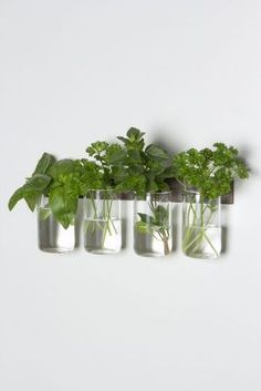 Manchester Glass Set- Could DIY this with those adjustable metal rings... Use in kitchen to hold fresh herbs!