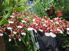 Conservatory of Flowers.