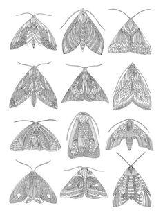 Moths by Millie Marottan