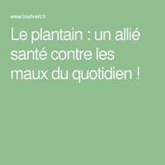 Le plantain : un allié santé contre les maux du quotidien !