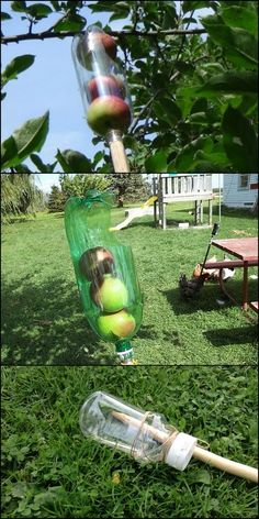 Can't reach the fruits hanging from the higher branches of your trees? Don't let them go to waste, use a fruit picker!  Now why buy one when you can one out of a soda bottle?  This little DIY project costs nothing since all the materials are recycled.