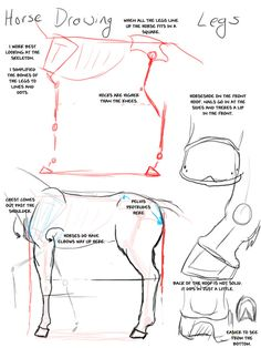 Horse_Drawing__Legs_by_modesty, how to draw a horse, drawing horses anatomy, How to draw Animals, tutorials for drawing animals, animal anatomy, animal sketches, cute, kawaii, realistic, animals , horse leg, art teacher, art lesson