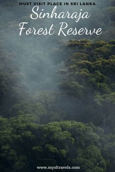 Sinharaja forest reserve is one of the few virgin forests left in the world. It is a national park and a biodiversity hotspot in Sri Lanka. #srilanka #sinharajaya #travel Plant Species, Bird Species, Herbal Plants, Crystal Clear Water, World Heritage Sites, Forests, Sri Lanka, Habitats, National Parks