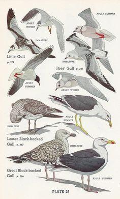 Vintage Bird Print | Vintage Buttercup via Etsy