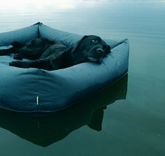 Modern Waterproof Dog Beds from Cloud7