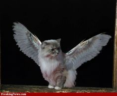 Cat with wings. What is not to like?