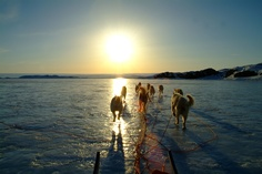 riding off into the sunset #dogsledding #greenland