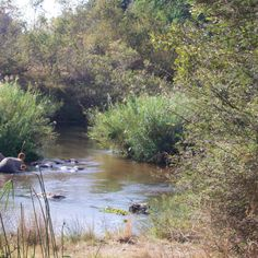 Sabie river by Isabel Display Advertising, Print Advertising, Marketing And Advertising, Beautiful Nature Pictures, Retail Merchandising, Kruger National Park, River, Retail