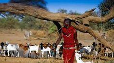 Výsledok vyhľadávania obrázkov pre dopyt Afrika Sumo, Wrestling, Sports, Africa, Sport