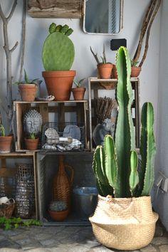 Urban Jungle Bloggers: Plantselfie by @look33