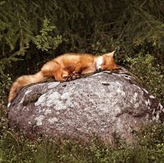 Like cats, foxes seem to get comfortable just about anywhere. Fox by Krasska Nature Animals, Animals And Pets, Baby Animals, Funny Animals, Cute Animals, Wild Animals, Strange Animals, Woodland Creatures, Cute Creatures