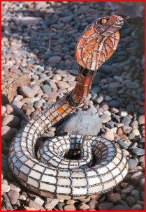 3D Stained Glass KING COBRA  stainedglasssculpture.com