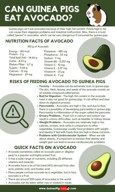 Guinea Pig Food, Guinea Pig Care, Guinea Pigs, Pigs Eating, Eating Raw, Pig Facts, Meat Rabbits, Nutrition Chart, High Fat Foods